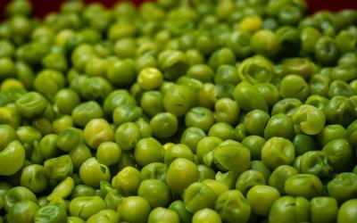 Los Guisantes, la verdura protagonista de Marzo