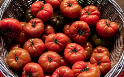 Los tomates, ya comienza el verano :) …